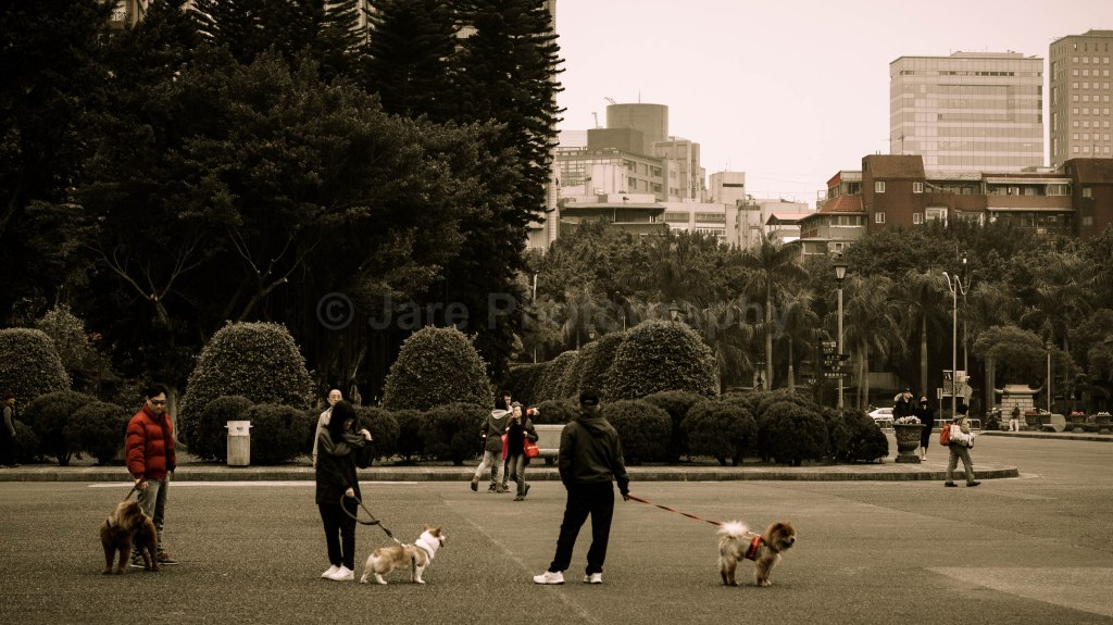 Taiwanese just love bringing their (cute) dogs anywhere...seriously.